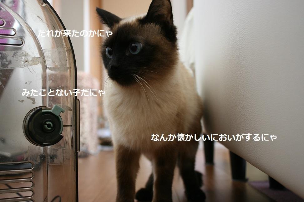 初音ちゃん 新生活スタート!_f0242002_18215939.jpg