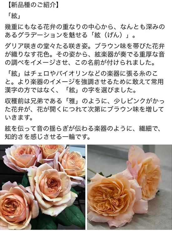 e0037611_20485562.jpg