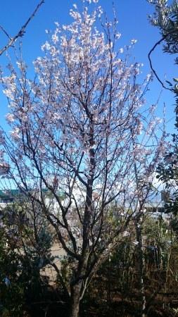 山桜_e0202111_17361572.jpg