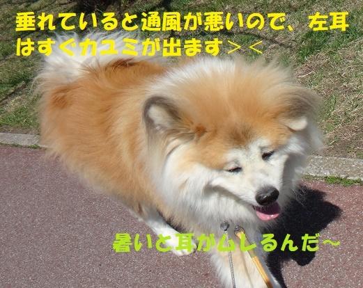 f0121712_23375951.jpg