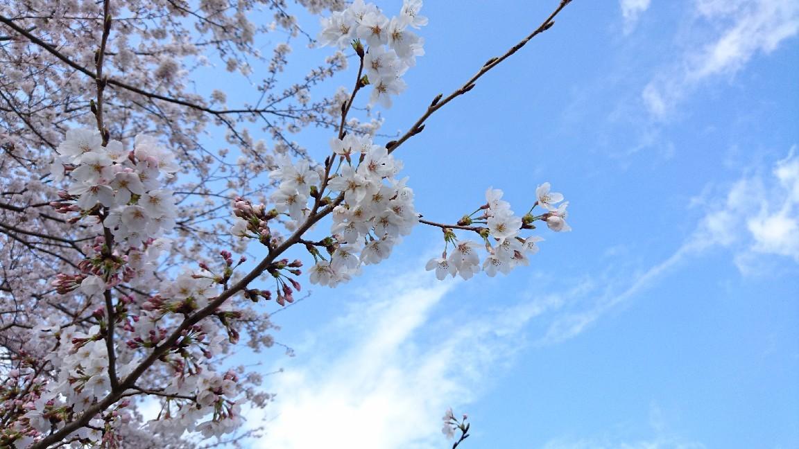 朝マック持って瀬戸川へ♪_b0093515_23243637.jpg