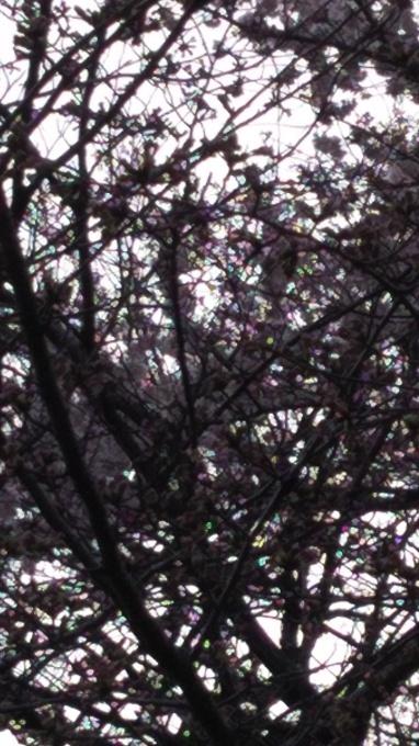 本格的な春爛漫へ_e0094315_07094763.jpg