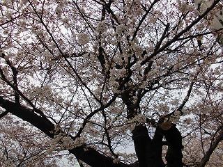 春分に寄せて_c0200917_22125255.jpg