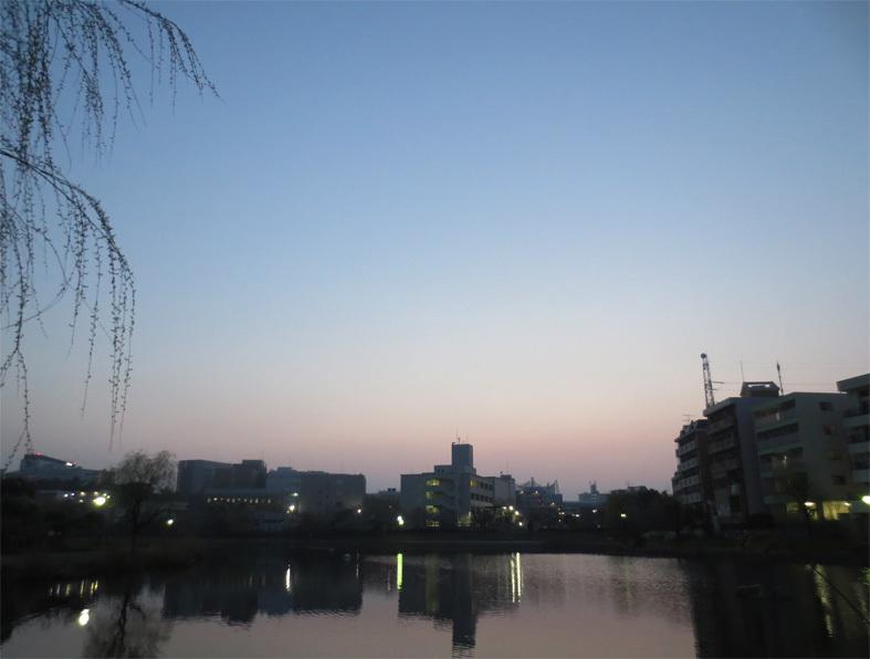■白い花、紅い日没──週替わりの夕暮れ[3/25]_d0190217_22123243.jpg