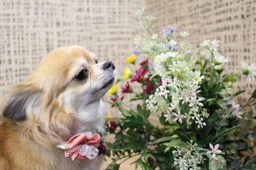 3月23日ご来店の、わんちゃんです!!_b0130018_20055433.jpg