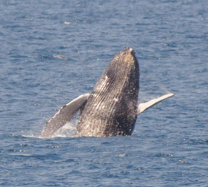 渡り鳥とクジラ_f0121321_19021028.jpg