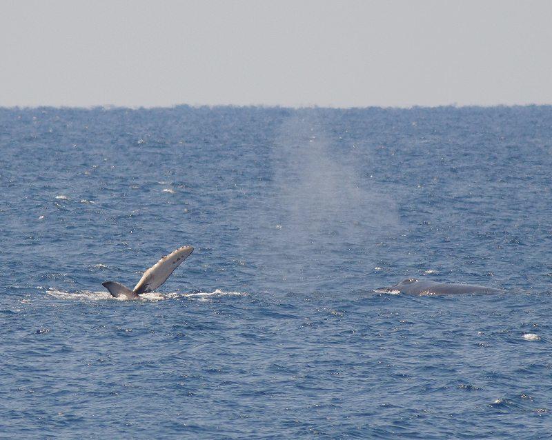渡り鳥とクジラ_f0121321_19021105.jpg