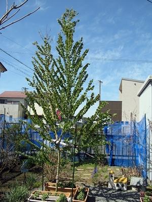 春の庭_f0129726_18055578.jpg