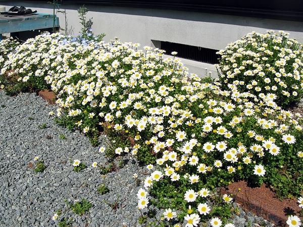 春の庭_f0129726_18155773.jpg