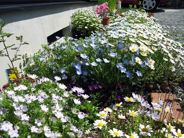 春の庭_f0129726_18163665.jpg