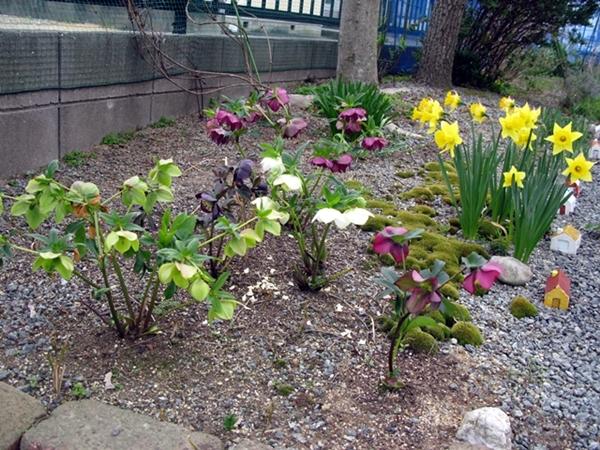 春の庭_f0129726_18251179.jpg