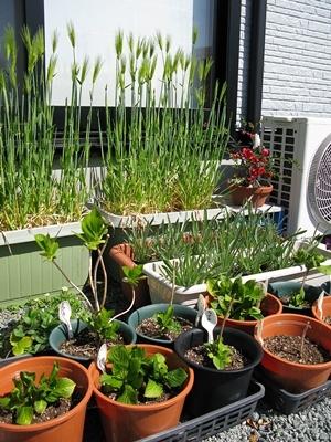 春の庭_f0129726_18304237.jpg