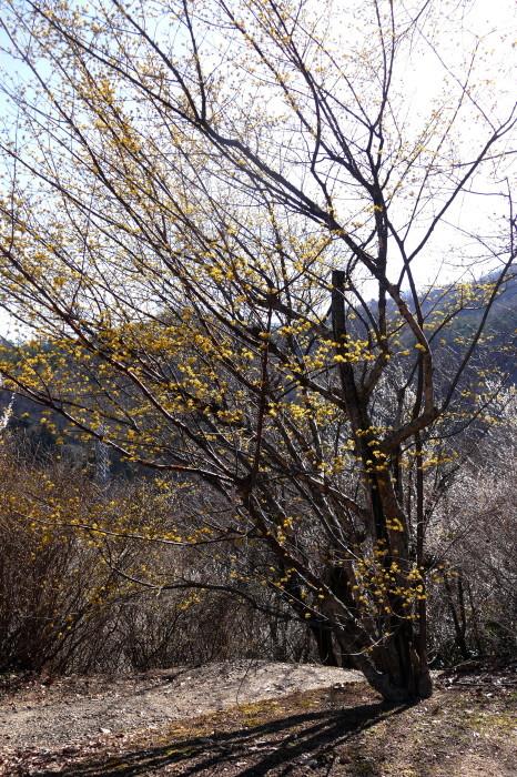 福島市渡利 「花見山の花」 ②_d0106628_11122842.jpg