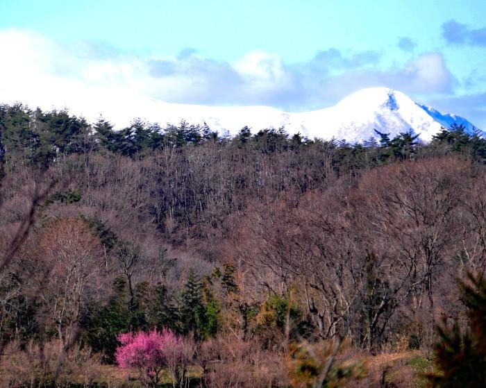 福島市渡利 「花見山の花」 ②_d0106628_11131143.jpg