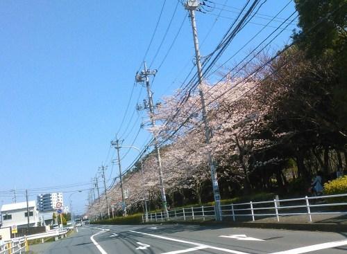 春のイベント..._b0137932_17492978.jpg