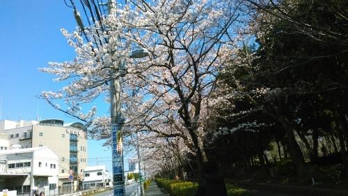 春のイベント..._b0137932_17503380.jpg