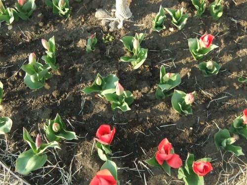春のイベント..._b0137932_18031414.jpg