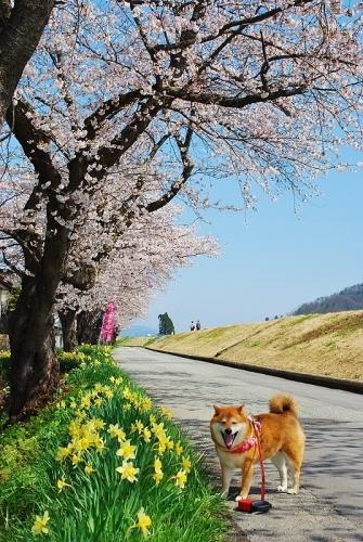一日一春⑨_b0314043_08230279.jpg