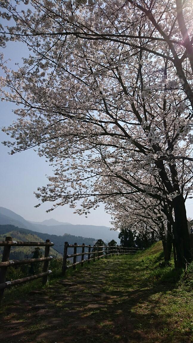 お花見_c0172049_21015434.jpg