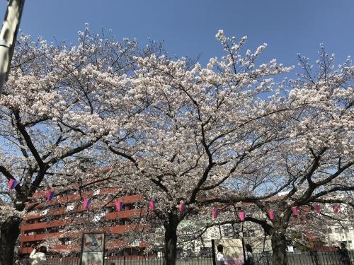 温かい気持ちに包まれた桜_b0307951_23344533.jpg