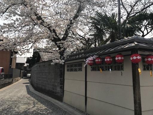 北野をどりのお客様・作家さんの素敵なコート・桜も開花_f0181251_2101028.jpg