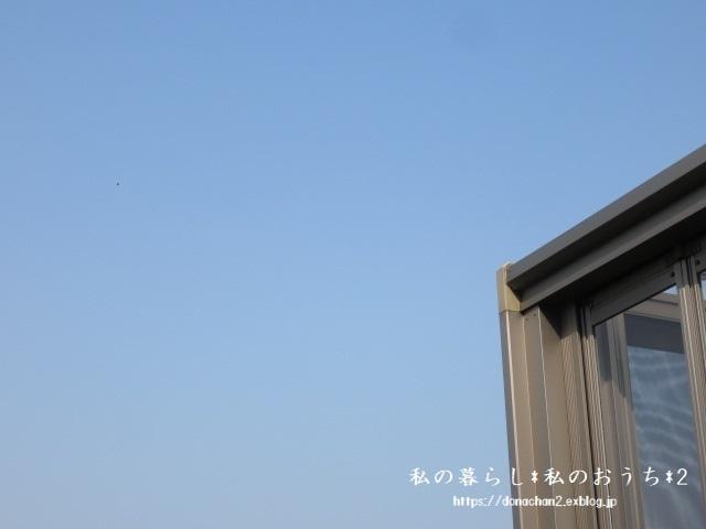 ++春&嬉しい薔薇の成長記録の続き②++_e0354456_09500752.jpg