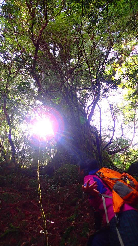神秘の森_b0160957_16121610.jpg