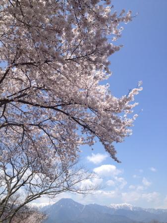 今年の桜前線、予想してみました。_b0218062_14120093.jpg