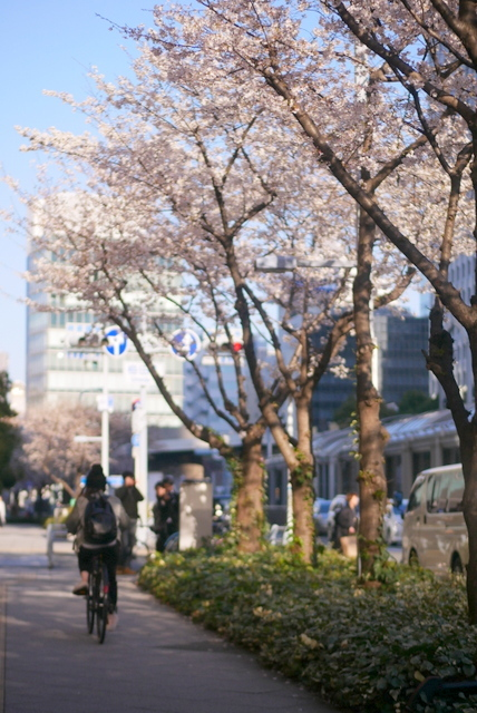 桜さん、こんにちは♪_b0358575_03000618.jpg