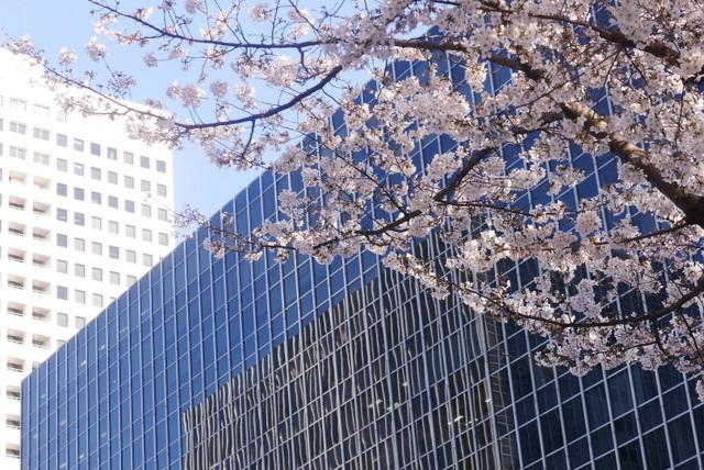 桜さん、こんにちは♪_b0358575_03025205.jpg