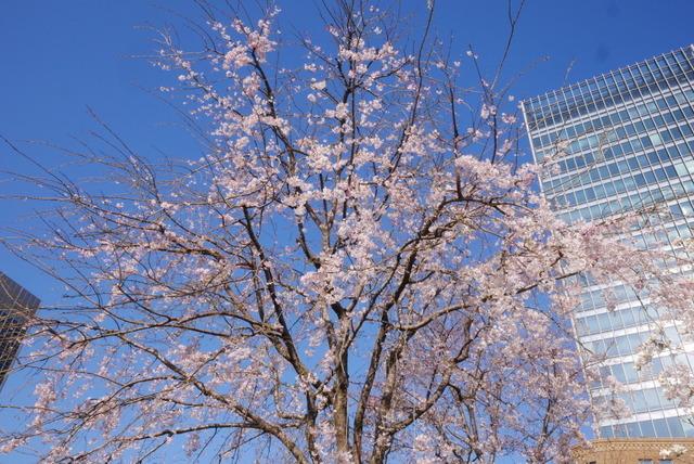 桜さん、こんにちは♪_b0358575_03041689.jpg