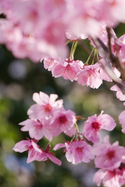 桜さん、こんにちは♪_b0358575_03104316.jpg
