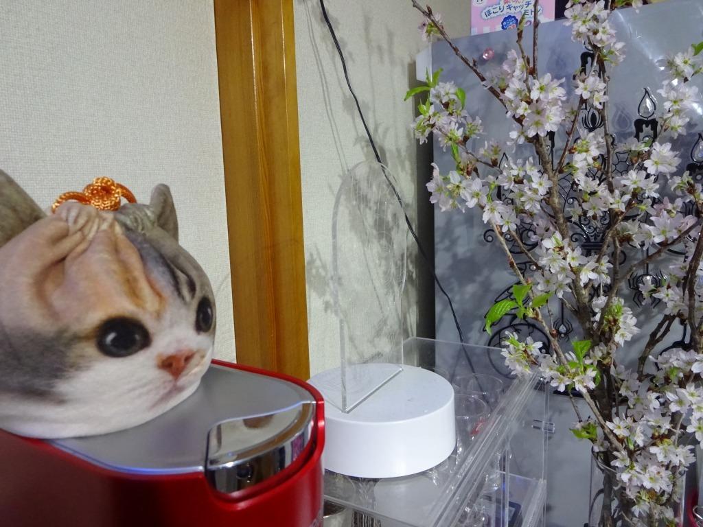 自宅で桜鑑賞、ライトアップも!_d0061678_10480713.jpg