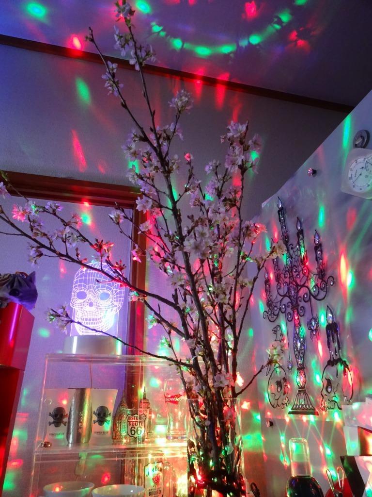 自宅で桜鑑賞、ライトアップも!_d0061678_10485912.jpg