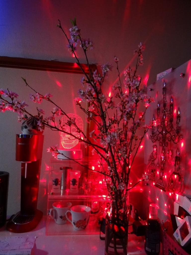 自宅で桜鑑賞、ライトアップも!_d0061678_10485963.jpg