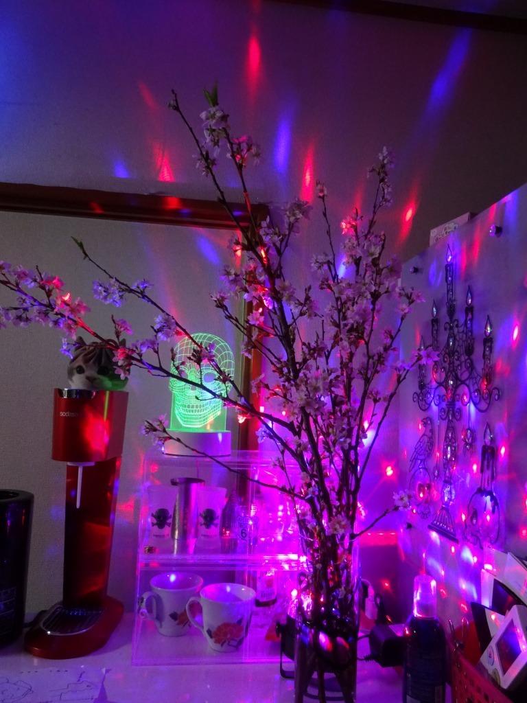自宅で桜鑑賞、ライトアップも!_d0061678_10485973.jpg