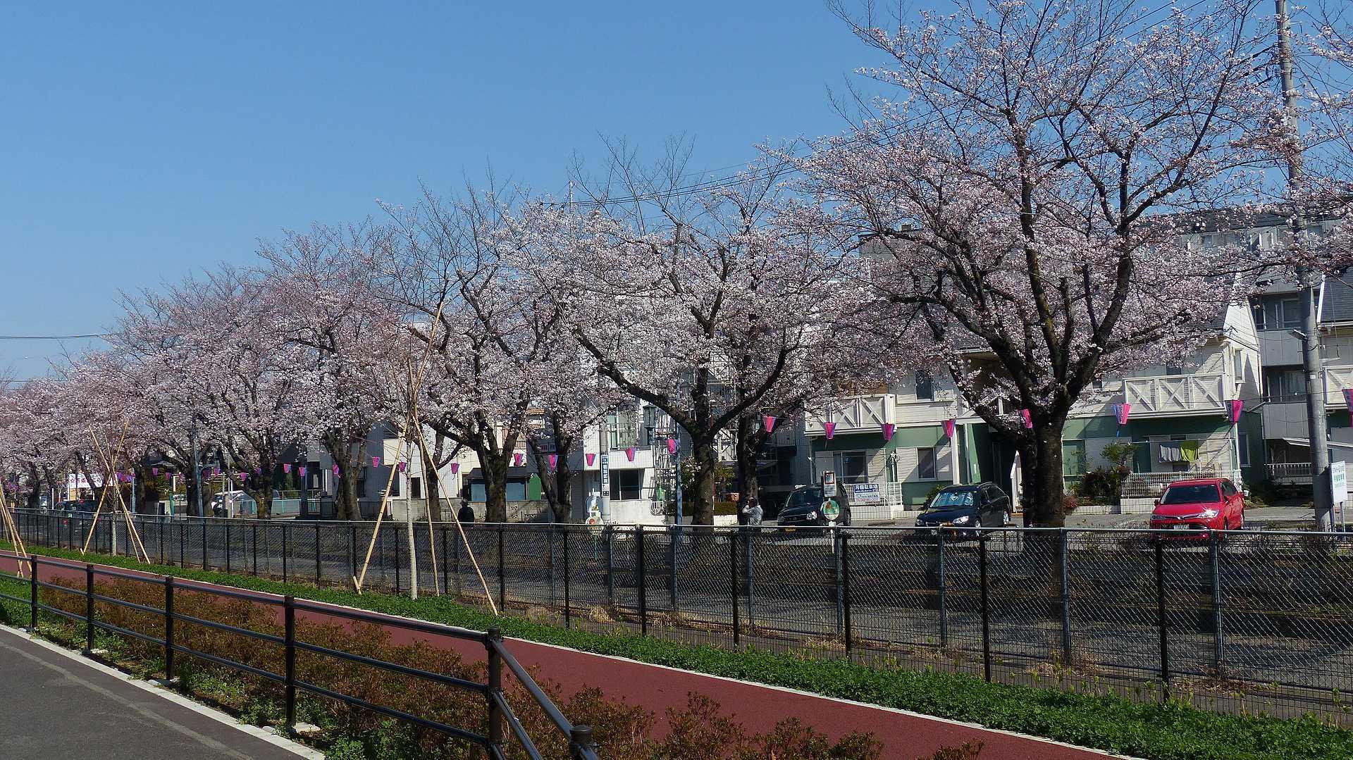 桜の便りに誘われて 【 2018 3/25(日) 】_a0185081_15131673.jpg