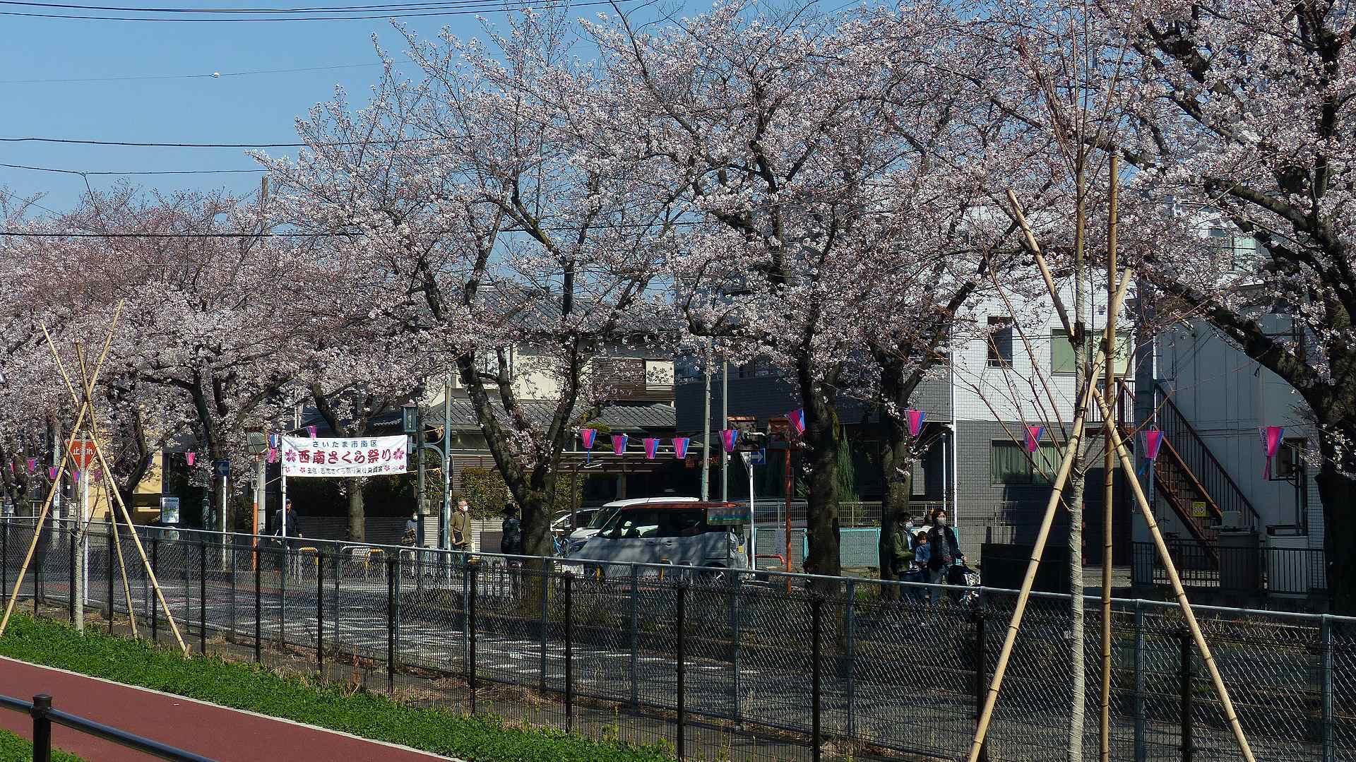 桜の便りに誘われて 【 2018 3/25(日) 】_a0185081_15133172.jpg