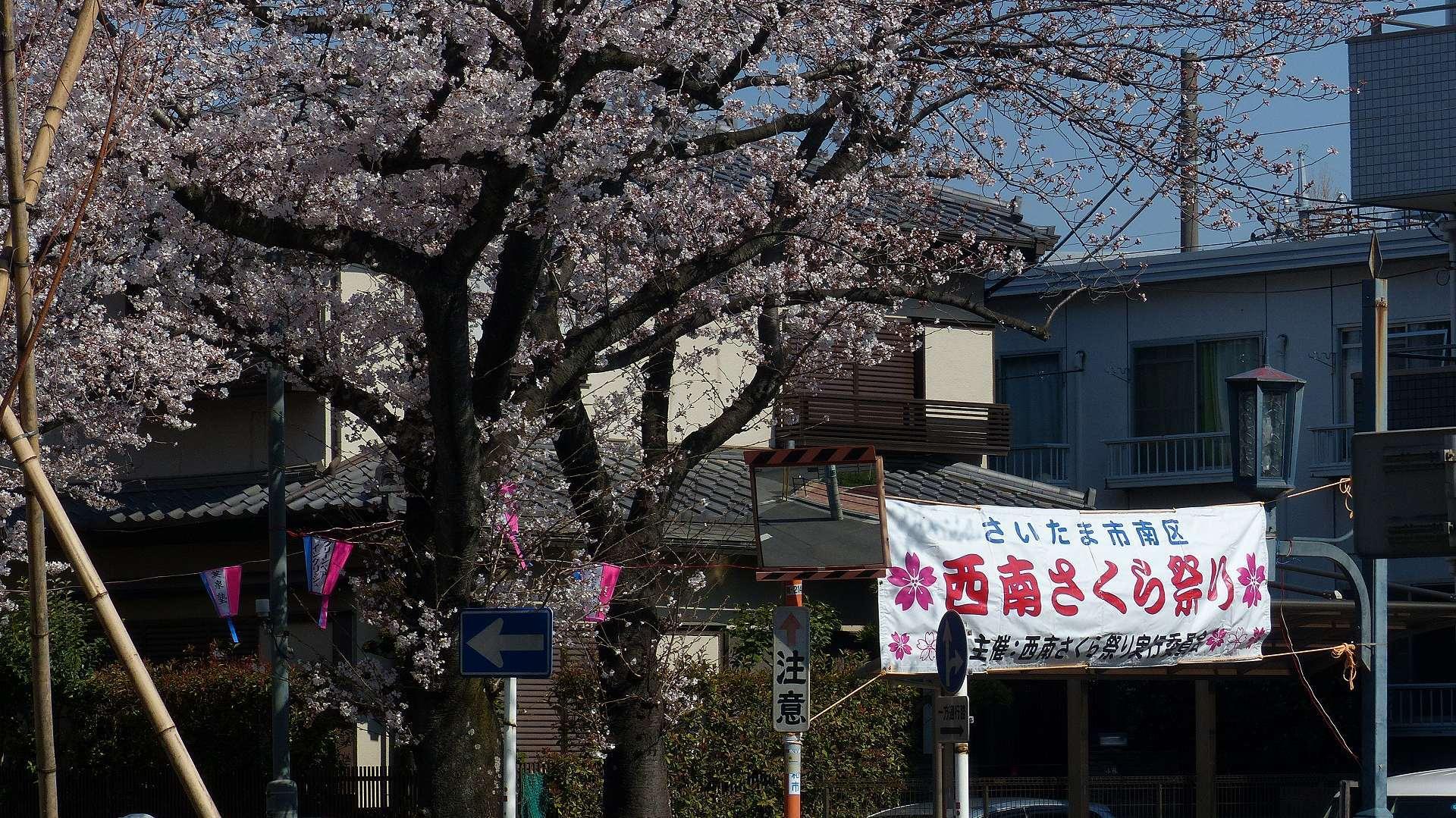 桜の便りに誘われて 【 2018 3/25(日) 】_a0185081_15134288.jpg