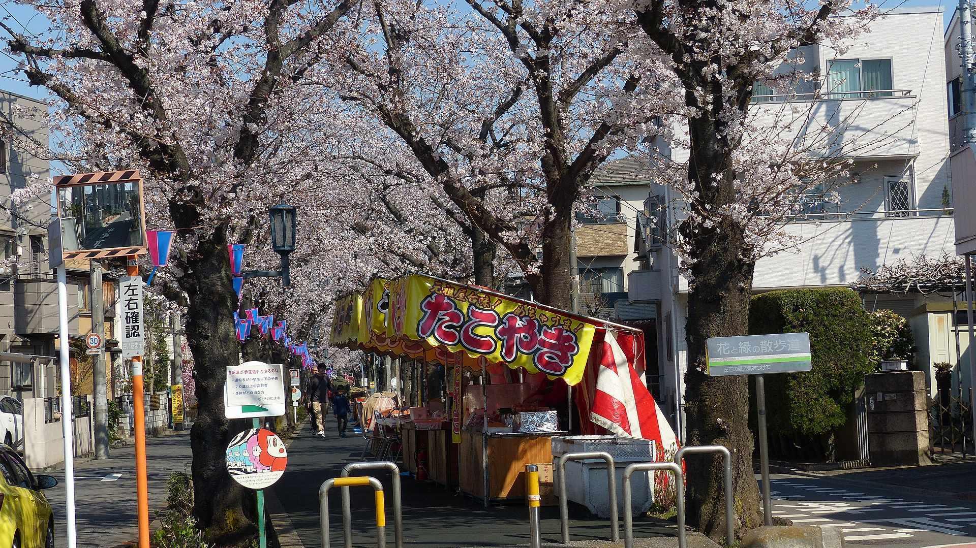 桜の便りに誘われて 【 2018 3/25(日) 】_a0185081_15140616.jpg