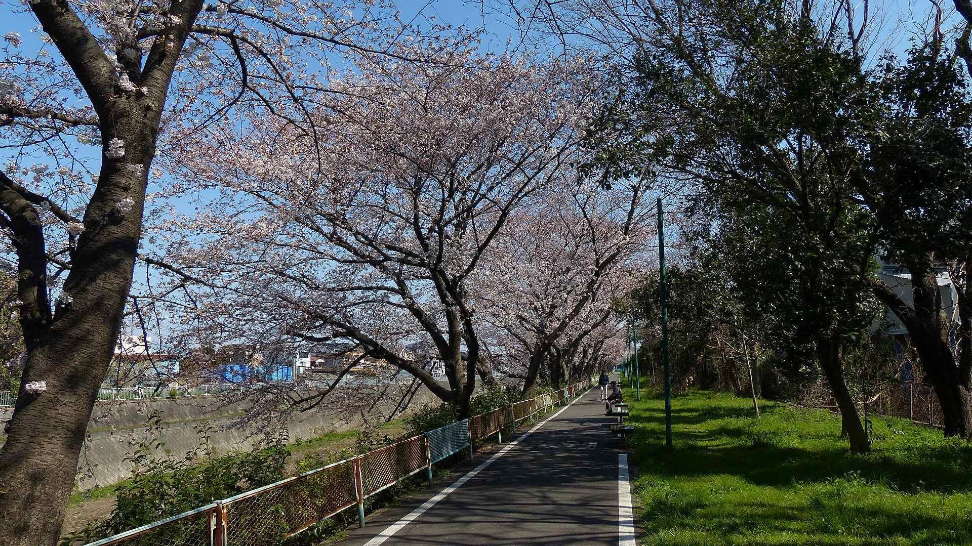 桜の便りに誘われて 【 2018 3/25(日) 】_a0185081_15313423.jpg
