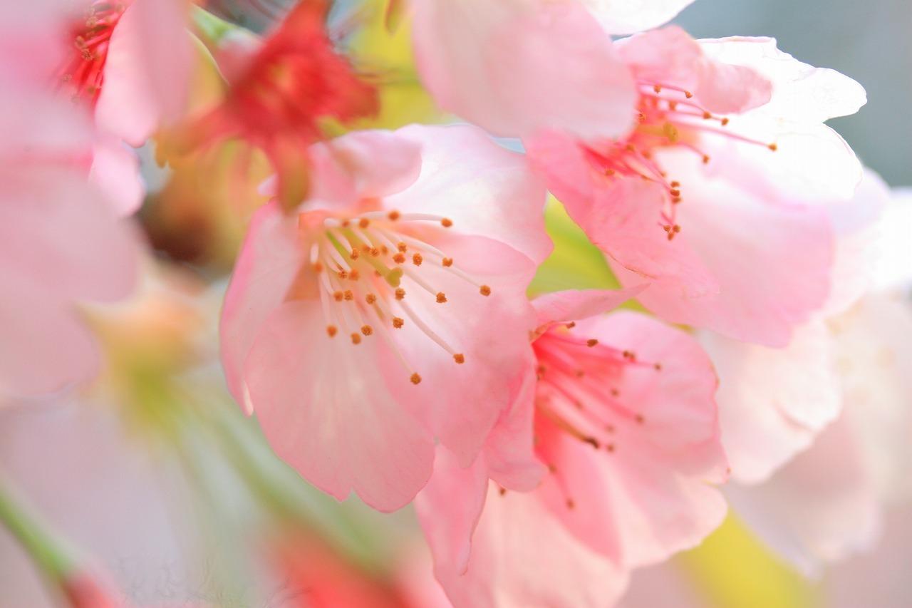 緑ある桜色_b0177584_12302264.jpg