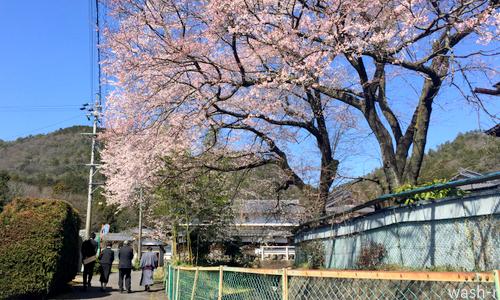 小学校の卒業式 ー春ですー_b0029488_00103510.jpg