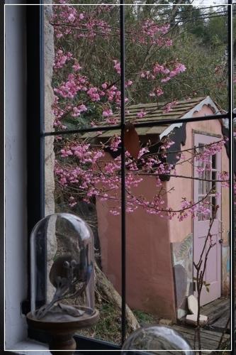 ** 桜 さくら サクラ **_c0207890_12561245.jpg