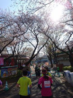 練馬こぶしハーフマラソン2018に参加してきました(^^)/_c0223192_21415810.jpg