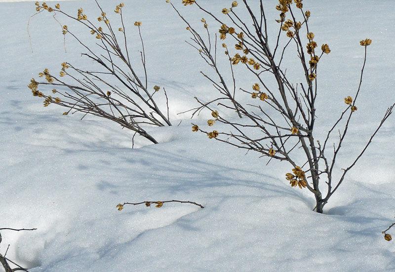 雪解け_d0162994_08280831.jpg