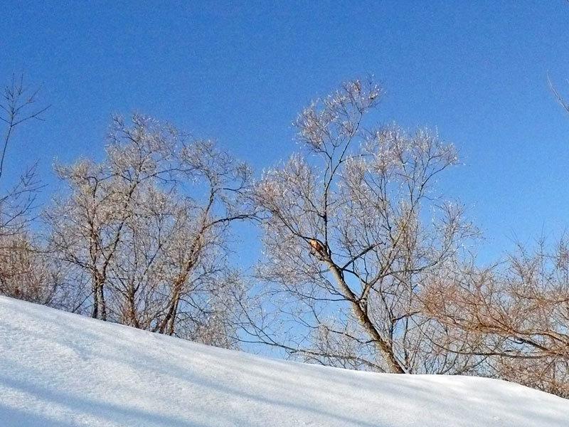 雪解け_d0162994_08294860.jpg