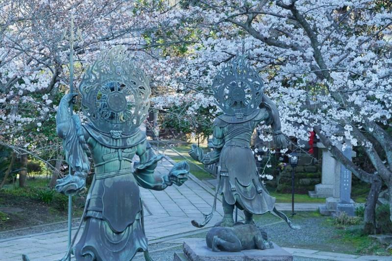 今日も鎌倉桜めぐりに行ってきました。_b0145398_22502149.jpg