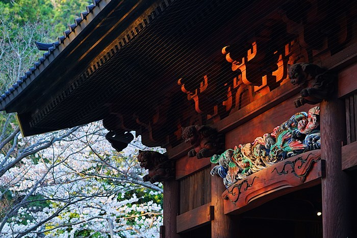 今日も鎌倉桜めぐりに行ってきました。_b0145398_22565850.jpg