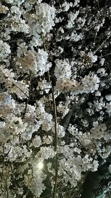 桜がキレイです。なん..._d0092901_23005820.jpg